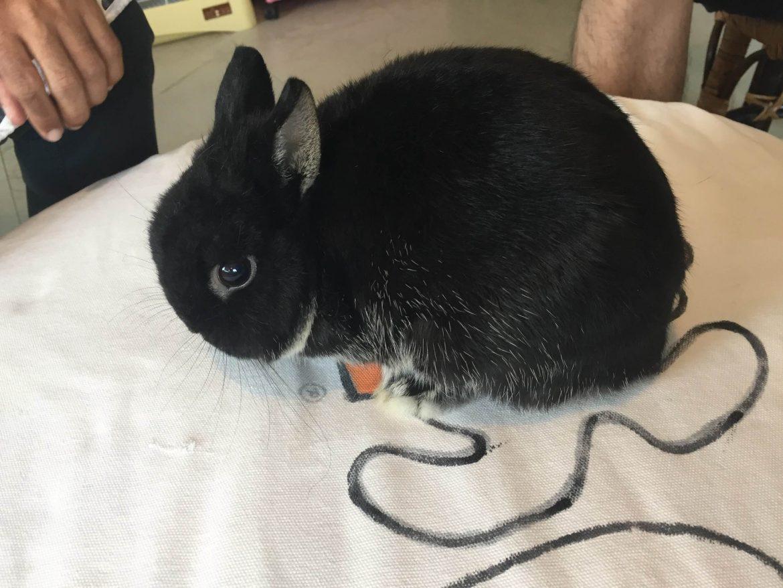 แอ่วเชียงใหม่กับน้องกระต่ายขนฟูหูตั้งคิ้วท์ๆ (ไม่รักกระต่ายก็อ่านได้)